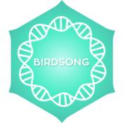 POSITIVITY Birdsong